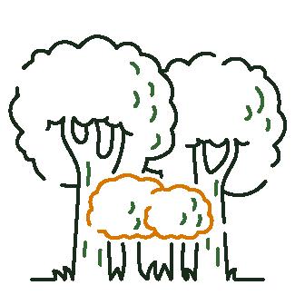 Tree 4 Four